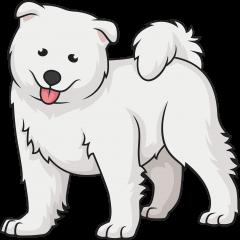 7-samoyed-dog